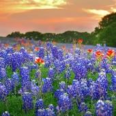 Holiday Jon 2015 Texas Spring Sunset
