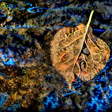 "Dennis Sabo's ""Wishing Leaf"" at Dogwood Arts Exhibition"