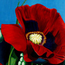 "Rudolf's ""Red Poppy"" in Southwest Art Magazine post image"