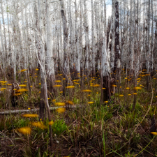Danielle Austen's Art at Everglades National Park