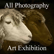 All Photography 2013 Online Art Exhibition
