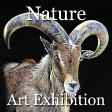 Nature 2014 Online Art Exhibition – Overall Winning Artists Category – Post Image