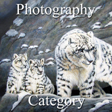 Nature – Photography Category post image