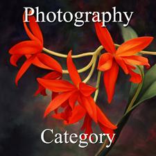 Photography - Hein - Botanicals 2015 - 4 x 4 - 300 Red_Hat_Girls