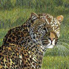 Post Image - 225 - Best - 4 x 4 - Leopard