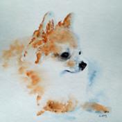 Richard Wong Announces Pet & Wildlife Portraits