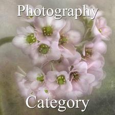 Botanicals Art Exhibition – Photography & Digital post image