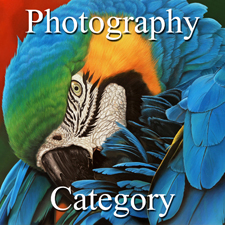 Photography Category - OA - Duke-J (1) Img #2  Preening