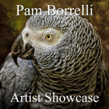 Pam Borrelli - Artist Showcase Feature