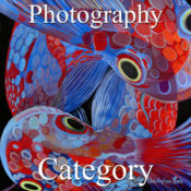 2017 Open Exhibition - Part 3 - Photography & Digital
