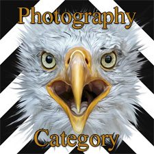 """555 Special"" 2019 Art Exhibition - Part 2 - Photography, Digital & 3D Categories"